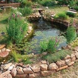 Fotos de construyo mini lagunas y estanques para peces for Estanques para peces ornamentales