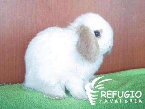 Conejos de bebés - Imagui
