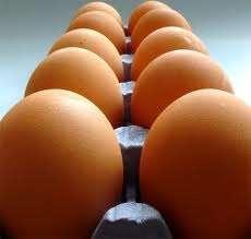 Venta de huevos solo al por mayor a nivel nacional  y para  exportación