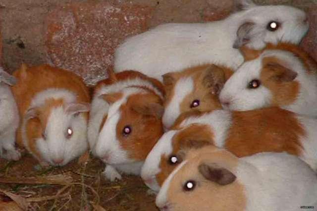 venta de mascotas lima: