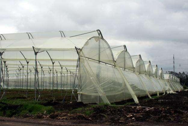 Dise o y construccion de invernaderos viveros en for Construccion de viveros