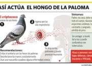 FUMIGAMOS PIOJOS DE PALOMAS, CHUCHUYS LIMA 792-4646