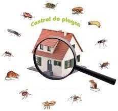 ?fumigacion-prevencion y control de plagas 992049431 / 7921588 barranco, chorrillos, surco