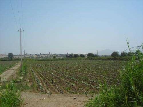 Vendo terreno agricola de 31 has en ica