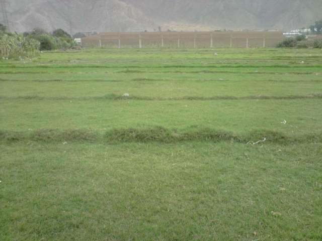 Terreno huachipa 10,000 m2 us. 230 x m2