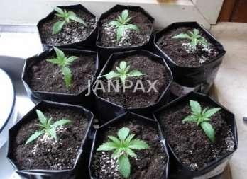 Janpax - bolsas para invernadero
