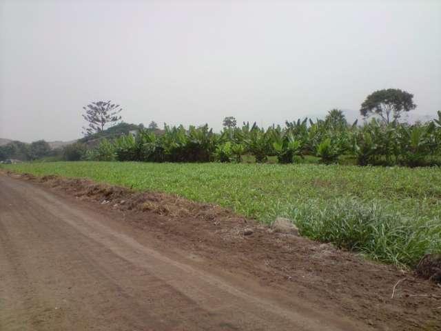 Terrenos agrícolas en olmos