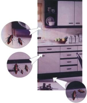 Fumigaciones, cansado de tener cucarachas en la cocina? la solucion llego fumigaciones, cansado de tener cucarachas en la cocina? la solucion llego