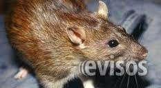 Control de ratas, ratones, pericotes desratizaciones limacontrol de ratas, ratones, pericotes desratizaciones lima