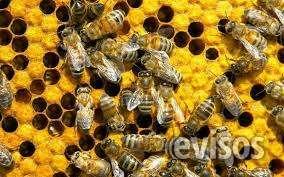 No mas abejas - solucion inmediata - fumigar lima peruno mas abejas - solucion inmediata - fumigar lima peru