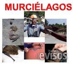 Murcielagos - exterminamos murcielagos en lima - fumigaciones 792-4646murcielagos - exterminamos murcielagos en lima - fumigaciones 792-4646murcielagos - exterminamos murcielagos en lima - fumigaciones 792-4646murcielagos - exterminamos murcielagos en lim