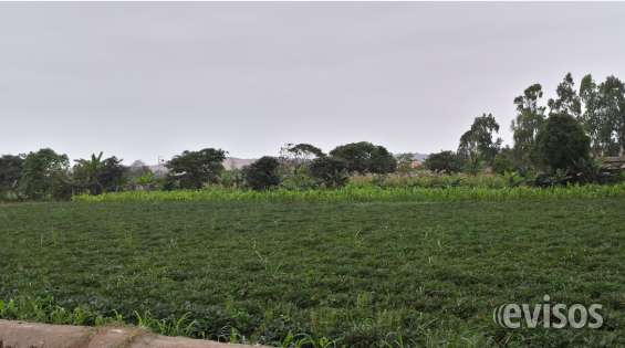 Vendo terreno a unos metros del canal 4 en pachacamac
