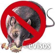 Fumigar ratas, desratizaciones, matar ratas al instante fumigarfumigar ratas, desratizaciones, matar ratas al instante fumigar