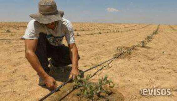 Terrenos para cultivos de uva y espárragos