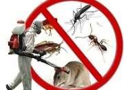 Control de plagas ecologico 988803568