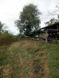 Vendo terreno 10 hectáreas morales tarapoto