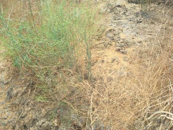 Evaluación hídrica causando eliminación de la parte suelo agrícola