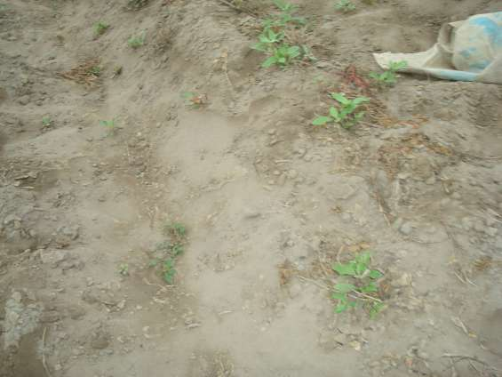 Fotos de Evalucion en un terreno de cultivo