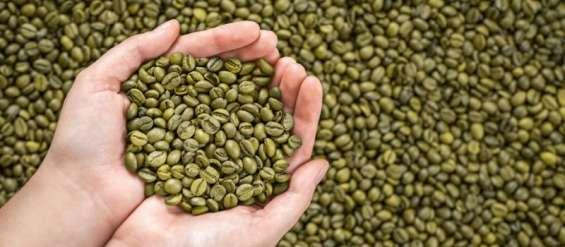 Fotos de Cafe verde para adelgazar (producto organico 100% natural) 1