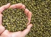 cafe verde para ADELGAZAR (producto organico 100% natural)