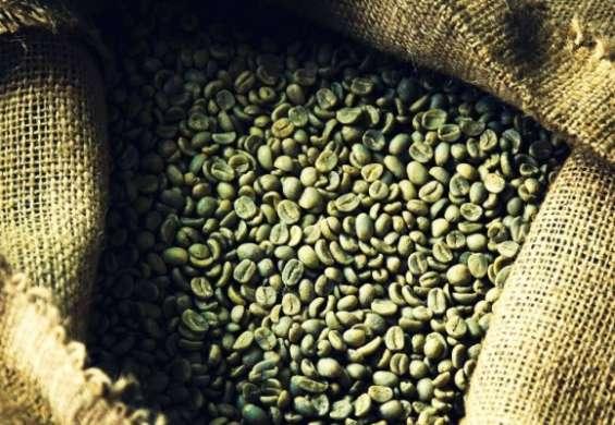Fotos de Cafe verde para adelgazar (producto organico 100% natural) 5