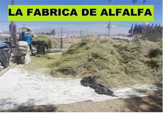 La fabrica de alfalfa